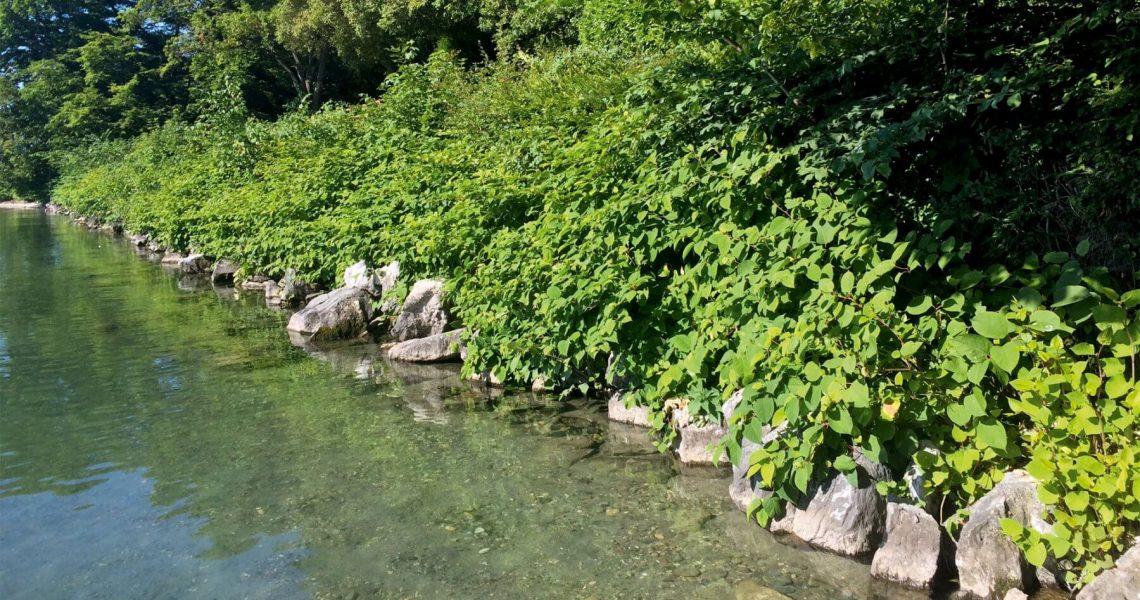 les-rives-du-leman-sont-envahies-1800x1016